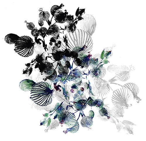 peacock_black